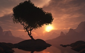 Picture sunset, tree, the evening, island