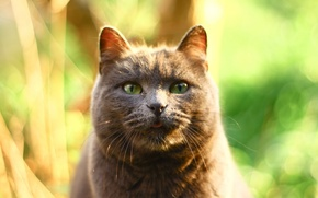 Picture cat, glare, grey, background