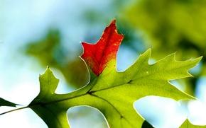 Picture autumn, macro, sheet