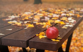 Picture drops, bench, Apple, falling leaves