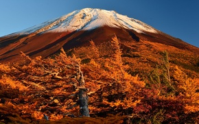 Picture autumn, the sky, trees, Japan, slope, mount Fuji