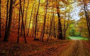 Picture road, autumn, forest, leaves, trees, landscape