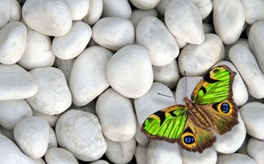 Picture stones, butterfly, colorful, butterfly, design by Marika, white stones