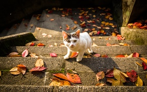Picture cat, look, leaves, ladder, autumn