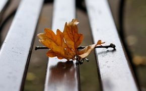 Picture bench, sheet, branch, autumn
