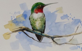 Wallpaper animals, bird, beak, watercolor, common archilochus, common Hummingbird