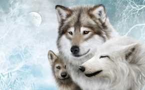 Wallpaper Wolf, Wolf, pack, wolves, family, moon, the moon, wolves, white, background, snow, snow, family
