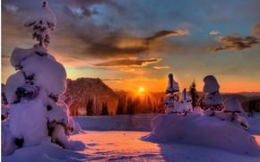 Wallpaper winter, forest, the sun, rays, light, snow, tree
