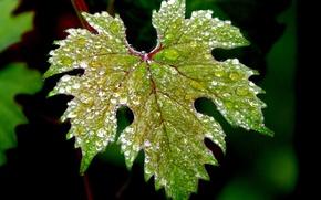 Picture water, drops, macro, nature, green, leaf, macro