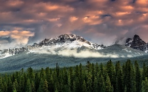 Picture forest, the sky, clouds, snow, mountains, fog, tops, ate, Wallpaper from lolita777