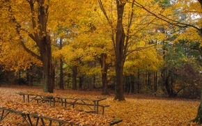 Picture trees, Park, foliage, Autumn, falling leaves, trees, nature, park, autumn, leaves, fall