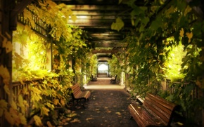 Wallpaper benches, corridor, grapes, leaves