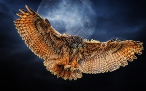 Picture owl, wings, The moon, Photoshop