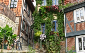 Picture bike, city, the city, building, home, Germany, flowers, Germany, flowers, street, street