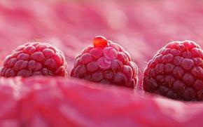 Picture macro, berries, raspberry, trio
