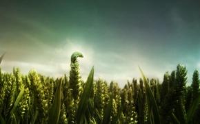 Wallpaper Field, wheat, lizard, green