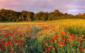 Picture summer, grass, trees, sunset, flowers, nature, Maki, Field, the evening, red, path, field