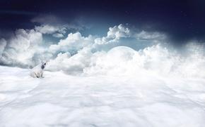 Wallpaper The sky, Clouds, Stars, White, Polar bear