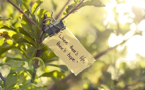Picture greens, leaves, the sun, macro, light, hope, life, mood, green, leaf, branch, quote