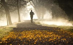 Wallpaper autumn, Park, morning, fog