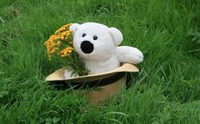 Picture background, mood, Wallpaper, toy, bouquet, White, bear, in the hat, a bunch, mishechka