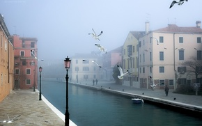 Picture birds, the city, Venice
