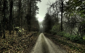 Picture road, sadness, autumn, 154