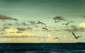 Wallpaper sea, the sky, freedom, water, clouds, flight, landscape, birds, nature, river, background, the ocean, widescreen, ...