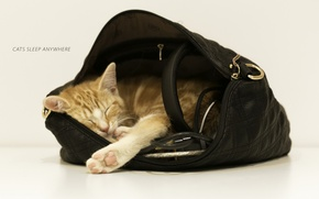 Picture cat, background, bag