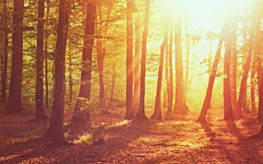 Picture autumn, forest, grass, leaves, the sun, light, trees, nature