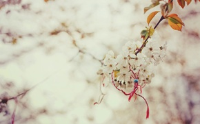 Picture macro, branch, spring, Sakura, magic, the knot
