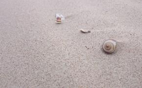 Picture summer, sea, shell, beach