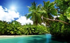 Wallpaper sea, the sun, tropics, palm trees, the ocean, summer, beach, sea, ocean, blue, paradise, vacation, ...