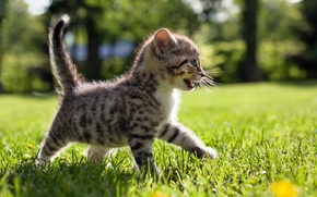 Picture grass, nature, small, walk, kitty