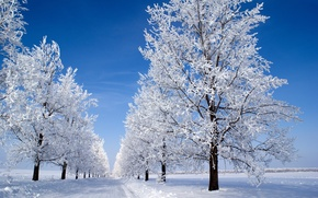 Picture winter, the sky, snow, trees, blue, morning, Snow morning