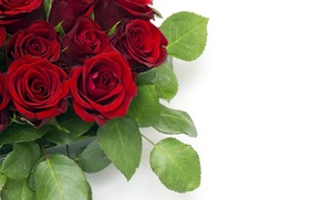 Picture flowers, buds, leaves, bouquet, red roses