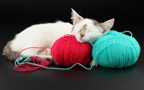 Wallpaper red, balls, blue, cat