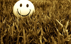 Picture grass, smile, smile, mood, smile