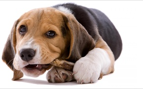 Picture game, dog, mood, Animals