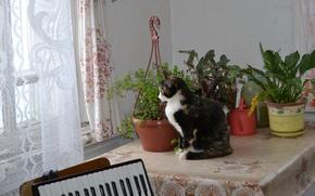 Picture cat, mood, Musya, tri-color, Goulder