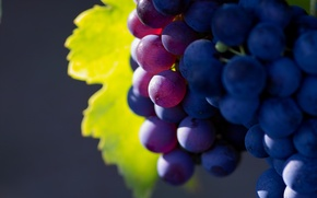 Wallpaper grapes macro photo, fruit, fruit, nature, a great solution, grape