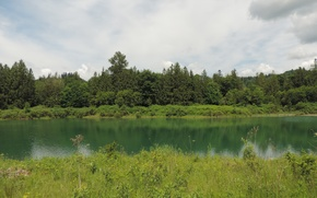 Picture greens, summer, grass, trees, lake, green, Nature, summer, forest, trees, nature, lake, scenery