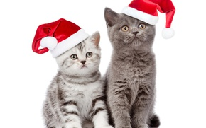 Picture cat, look, hat, Christmas, New year, Christmas, Cats