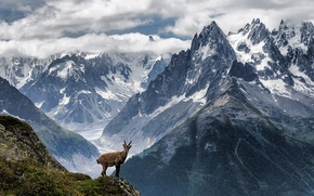 Picture the sky, grass, clouds, mountains, rock, mountain goat
