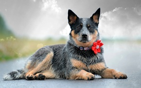 Picture flower, look, dog, collar