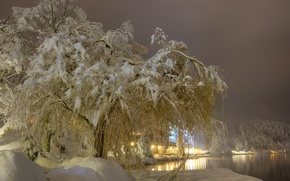 Picture winter, snow, trees, night, lights, fog, lake, lights, the snow, Slovenia, Bled