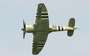 Picture airplane, aviation, Hawker Sea Fury