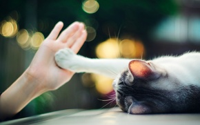 Wallpaper lights, paw, hand, Cat, lies, palm, bokeh