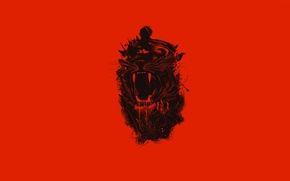 Wallpaper tiger, fangs, mouth