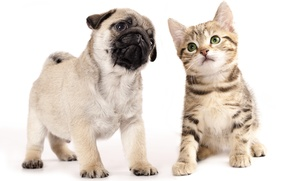 Picture kids, puppy, kitty
